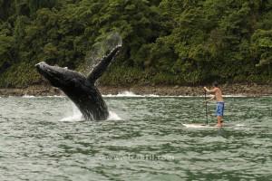 salto-ballena-sup-nuqui(1)[1]